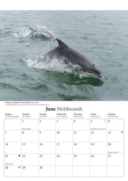 Mayo 2020 Calendar June