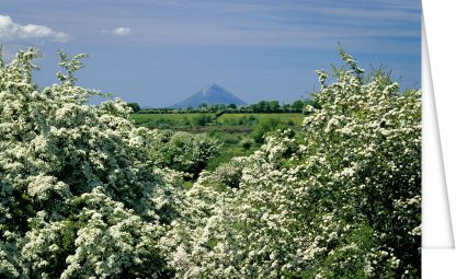 Croagh Patrick and Hawthorn