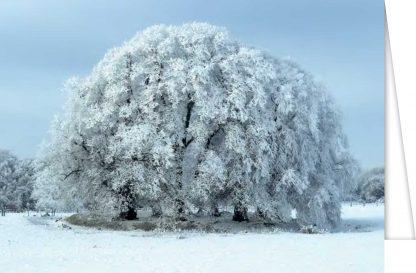 Lime tree ringfort in winter
