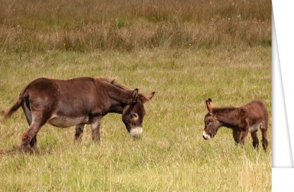 Pat Gibbons' donkey and foal