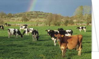 Rural Mayo Scene
