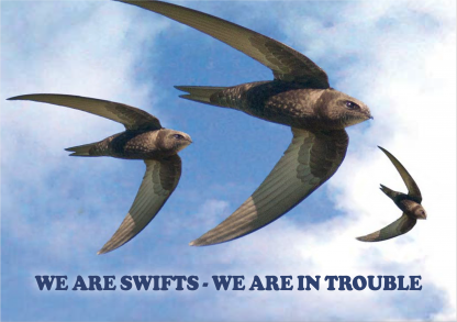Swift Booklet Cover